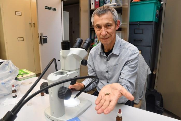 Eerste boommuggenstrontjes ontdekt in Bos van Aa, maar laat u vooral niet misleiden door de naam