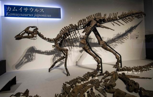 Nieuwe dinosaurussoort van 8 meter groot ontdekt in Japan