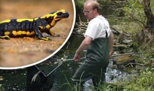 """Dit is het Vlaamse walhalla voor salamanders:  """"Een voorbeeldgemeente voor heel Vlaanderen"""""""