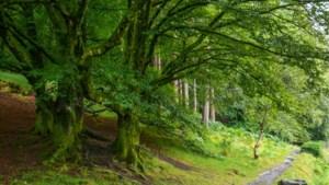 Ierland wil klimaatverandering aanpakken door 440 miljoen bomen te planten
