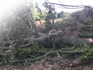 Bomen geveld en beek verlegd: Natuurpunt dient klacht in tegen boer die weide in akker omzet