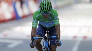 Waaieretappe in Vuelta levert Belgische zege op maar gooit klassement ook door elkaar: plots doet Quintana weer mee
