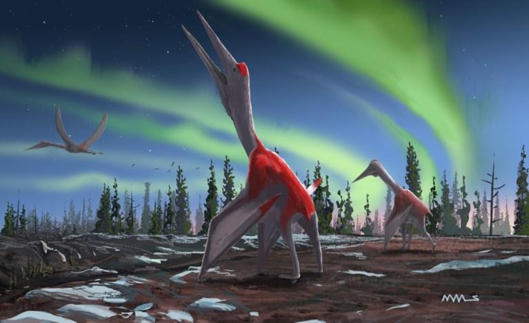 Een van de grootste vliegende reptielen geïdentificeerd in Canada
