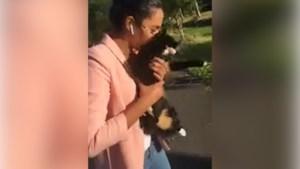 Politie op zoek naar vrouw die kat in sloot gooit