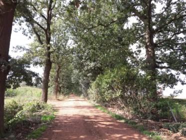 Waardevolle bomenrij mag niet weg voor nieuwe kleiontginning