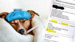 Dokter schrijft werknemer twee weken thuis omdat hond ziek is: