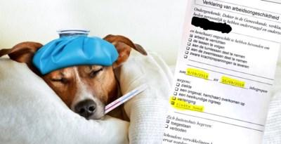 """Dokter schrijft werknemer twee weken thuis omdat hond ziek is: """"Dit is écht van de pot gerukt"""""""