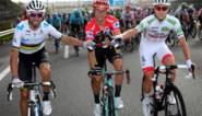 Alaphilippe ziet Roglic naderen in UCI-ranking, België blijft op één in landenranking