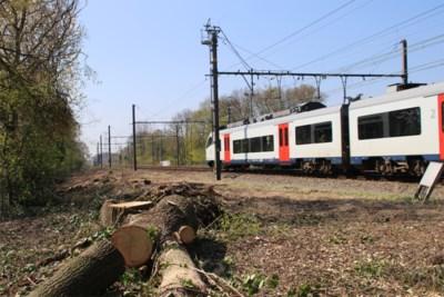 Treinen rijden stipter, maar... nog dit jaar vervangt NMBS snelle Desiro's door tragere 'varkensneuzen'