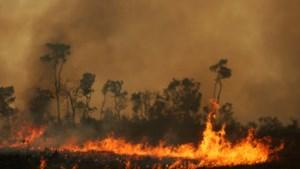 Oostenrijks parlement verzet zich tegen EU-akkoord met Brazilië wegens bosbranden