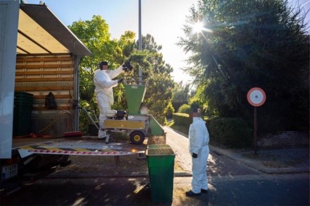 Wietplantage van zeshonderd planten ontdekt in Bilzen