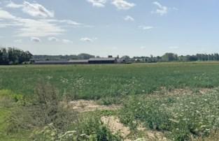 """Gunstig advies voor megastallen, ondanks bijna 2.000 bezwaarschriften: """"Je kan landbouwers toch niet verbieden aan landbouw te doen"""""""