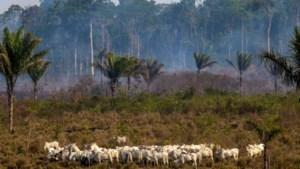 63 mensen opgepakt in Brazilië voor bosbranden Amazonegebied