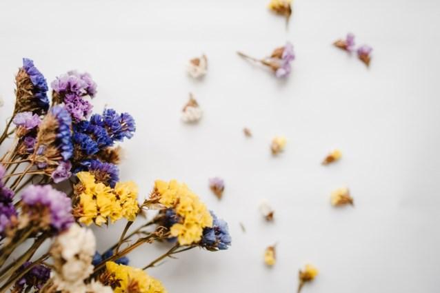 Haal de herfst in huis: boeketjes gedroogde bloemen maken comeback