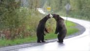 """Kwade grizzlyberen hebben hevige """"discussie"""" in het midden van de weg"""