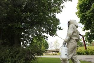 De beruchte 'wespenpiek' van vorig jaar lijkt alweer voorbij, biologen staan voor raadsel