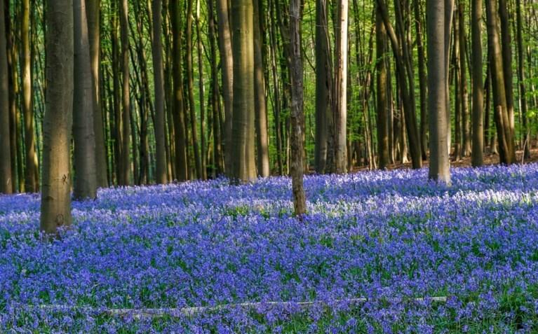 Oordeel zelf: haalde Disney inspiratie uit Vlaanderen voor het betoverde bos in Frozen 2?