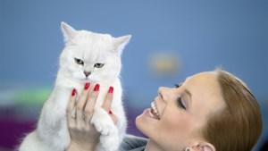 Katten zijn net als honden, zegt nieuw onderzoek