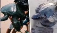 """Zeeschildpadden spoelen aan op strand en zijn helemaal bedekt met zwarte smurrie: """"Verontrustend"""""""