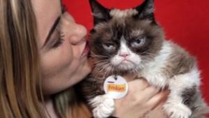 """Houdt een kat van zijn baasje zoals een hond? Experts zijn het oneens: """"Zijn we wel slim genoeg om hen te begrijpen?"""""""