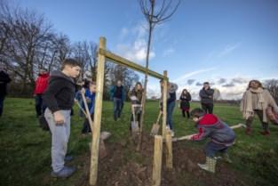 Groen Horebeke wil elk jaar 2.000 extra bomen planten, één per inwoner