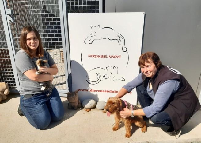 Massale steun voor dierenasiel na weigering vergunning: petitie in mum van tijd duizenden keren getekend