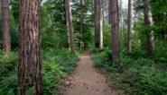 """Helft Europese boomsoorten met uitsterven bedreigd: """"Het is een heel hoog cijfer, maar jammer genoeg de realiteit"""""""