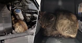 """Garagist maakt testritje met wagen en ontdekt dan kat onder motorkap: """"Geen idee hoe hij er in kroop"""""""