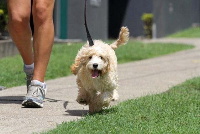 Boete van bijna 2.500 euro voor wie niet dagelijks met de hond gaat wandelen in Australisch Hoofdstedelijk Territorium