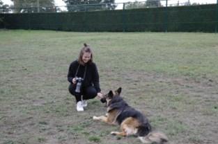 Fotografe brengt honden en baasjes samen op losloopweide