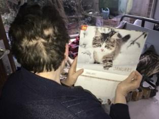 """Na de inbeslagname van haar 55 katten doet baasje (72) er alles aan om hen weer terug te krijgen: """"Ik kan alleen maar huilen, ik deed alles voor hen"""""""