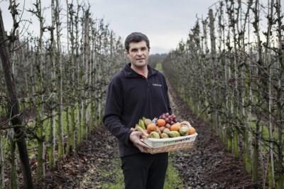 """Omzet Vlaamse fruitsector zakt met twaalf procent: """"Gitzwart jaar voor fruitboeren"""""""