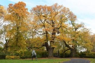 Natuurfotografen zoeken oudste bomen van het Meetjesland en ontdekken daarbij iets heel opmerkelijk