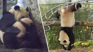 Kungfu Panda in Pairi Daiza