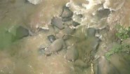Zes olifanten verongelukken in waterval