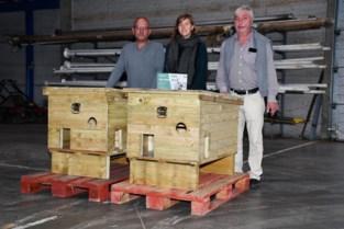 Diksmuide plaatst eerste schuilhok voor zwerfkatten
