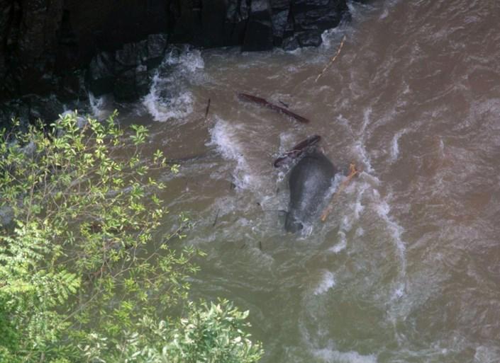 Trieste beelden: stierven elf olifanten omdat ze kalfje wilden redden?