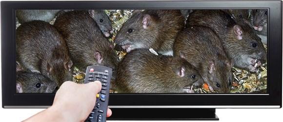 Ratten tussen het verse eten, de botox-business en wanneer schaapjes tellen niet meer helpt
