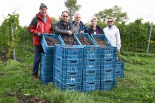 Mooie oogst binnengehaald op Ruidenberg