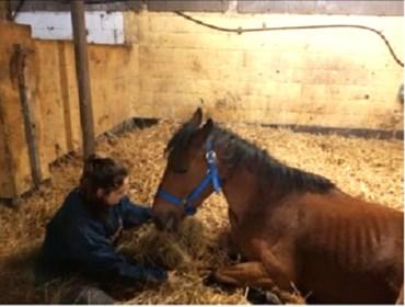 """Noémie (15) na vier maanden herenigd met pony Black: """"Ik huilde tranen van blijdschap"""""""