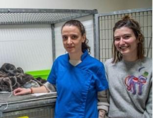 Uitgeput, blut en gebroken: vzw die zwerfkatjes opvangt, is slachtoffer van eigen succes