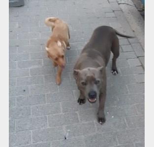 Loslopende honden terroriseren Kriekeveld