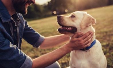 Hond maakt ons gezonder (en doet langer leven)