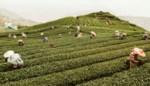 West-Vlaamse wordt vierde in Instagram fotowedstrijd