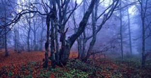 Groepsaankoop streekeigen bomen en struiken