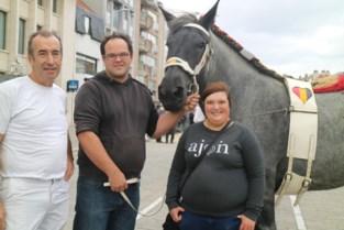 """Deinze overspoeld door trekpaarden: """"Ras is aan het uitsterven door verbod op afgeknotte staarten"""""""