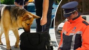 In deze gemeente gaat politie onaangekondigd scholen binnenvallen met drugshonden