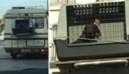 """Vakantiegangers binden hond vast aan de buitenkant van motorhome: """"Arm beest, echt beschamend"""""""