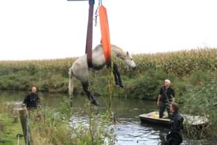 Brandweer redt twee paarden uit gracht