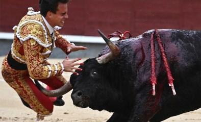 Spaanse stierenvechter zwaargewond nadat stier hem doorboort voor de ogen van zijn vriendin